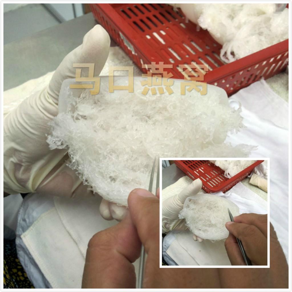 malaysia bird nest process